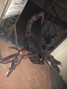 Scorpione di Roberto Molinelli