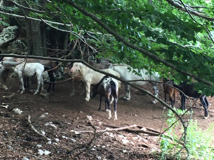 Mandria di cavalli a Campaegli